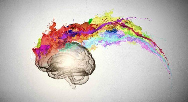 dibujo cerebro rastro olores